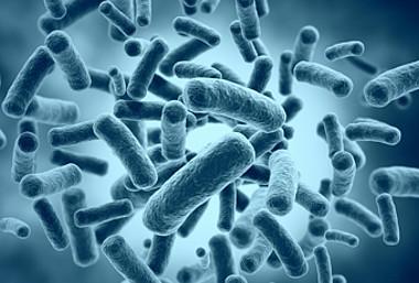 Legionellen können zu erheblichen gesundheitlichen Problemen führen.  Die wichtigsten Fragen dazu beantwortet der Experte Benedikt Schäfer.