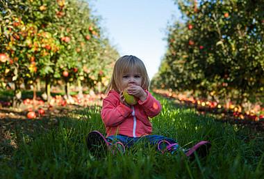 Kind sitzt zwischen Apfelbäumen und isst Apfel. Regionale und biologische Lebensmittel haben eine bessere Klimabilanz als konventionell hergestellte Lebensmittel.
